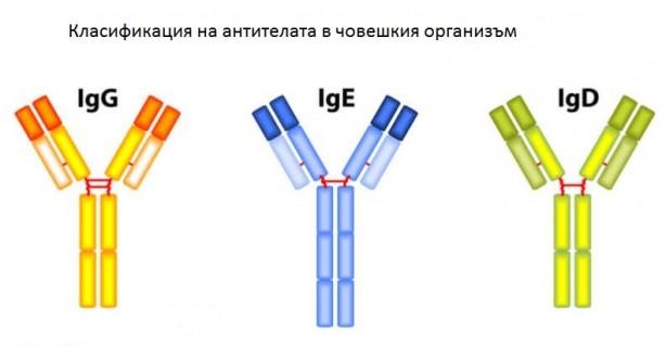IgE-antibodies